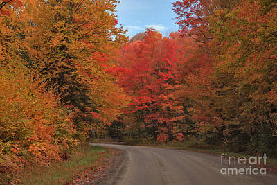 Maples Photograph - Bend On Abbott Hill Road by Charles Kozierok