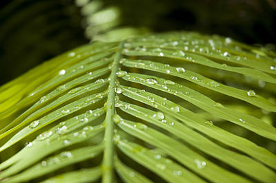 Art Print featuring the photograph Bending Ferns by Carolyn Marshall