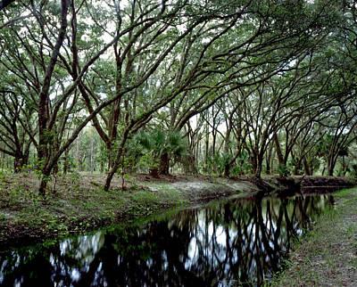 Photograph - Bending Oaks. Three Lakes W.m.a. by Chris  Kusik