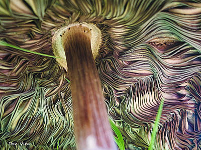 Beneath A Mushroom  Cc Art Print