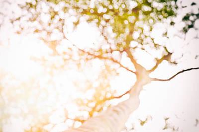 Photograph - Beneath A Tree 14 4945 by U Schade