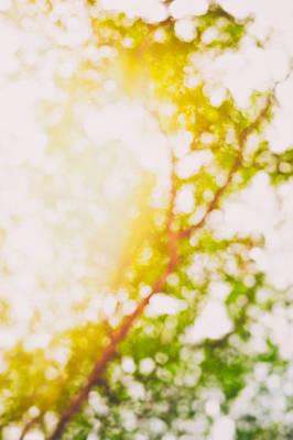 Photograph - Beneath A Tree 14 5194 by U Schade