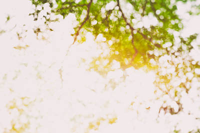 Photograph - Beneath A Tree 14 5195 by U Schade