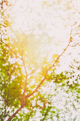 Photograph - Beneath A Tree 14 5199 by U Schade