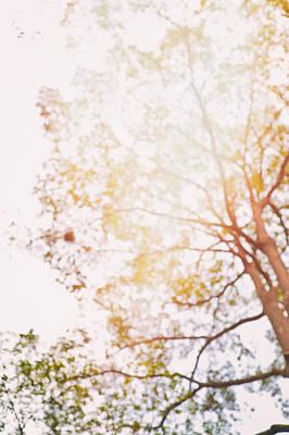 Photograph - Beneath A Tree 14 5284 by U Schade