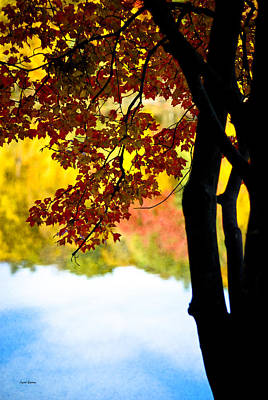 Photograph - Beneath The Leaves by Crystal Wightman