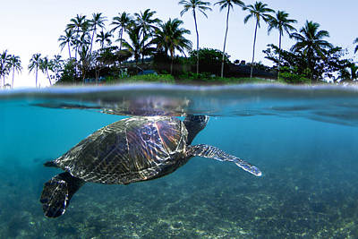 Hawaii Sea Turtle Photograph - Beneath The Palms by Sean Davey