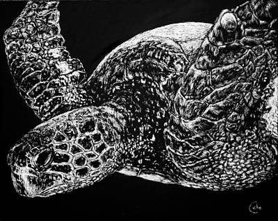 Reptiles Drawings - Beneath the Waves the Sea Turtle Swims by Nathan Cole