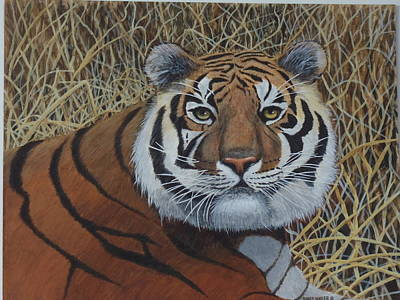 Painting - Bengal Majesty by James Lawler