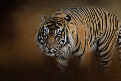 Photograph - Bengal Stare by Jai Johnson