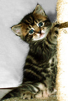 Photograph - Benny The Kitten Playing by Terri Waters