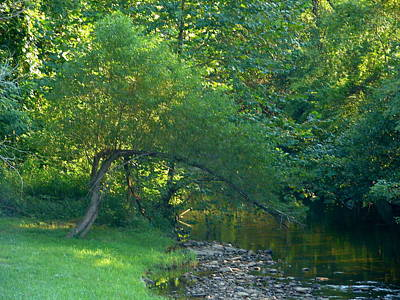 Photograph - Bent Tree Creek by Lew Davis