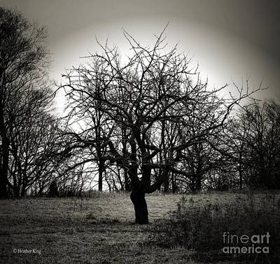 Photograph - Bereft by Heather King