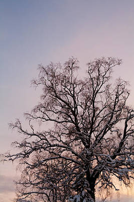 Bergen  Winter Tree Art Print by Hakon Soreide
