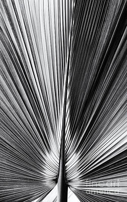 Palmetto Photograph - Bermuda Palmetto Monochrome by Tim Gainey