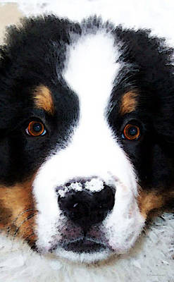 Dogs Digital Art - Bernese Mountain Dog - Baby It's Cold Outside by Sharon Cummings
