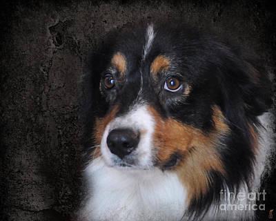 Bernese Mountain Dog Photograph - Bernese Mountain Dog by Jai Johnson