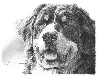 Drawing - Bernese Mountain Dog Pencil Portrait by Mike Theuer