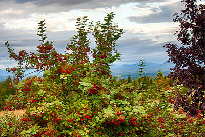 Photograph - Berries And Mountain View by Fred Larson