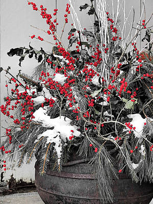 Photograph - Berries And Pines In Old Metal Pot by Janice Drew