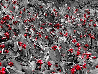 Berries Art Print by Dan Sproul