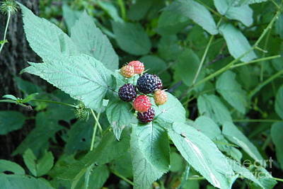 Photograph - Berries by Dezera Davis
