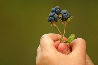 Photograph - Berries by Emanuel Tanjala