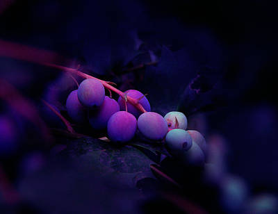 Photograph - Berries by Julian Cook