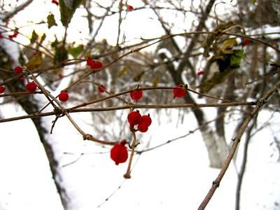 Michael Fitzpatrick Photograph - Berries by Michael Fitzpatrick