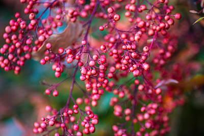 Berries Art Print by Mike Lee