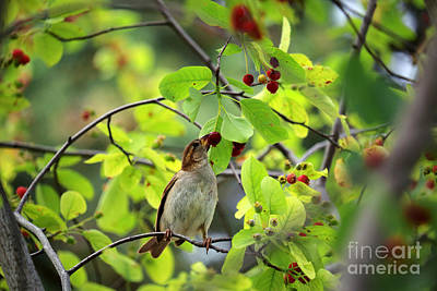 Photograph - Bird And Berries by Charline Xia