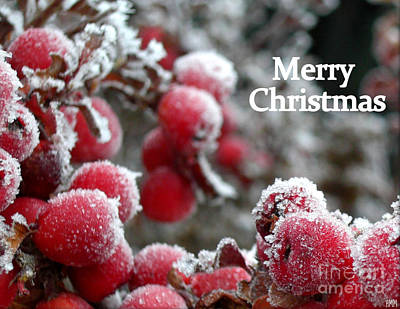 Photograph - Berry Christmas Card by Heidi Manly