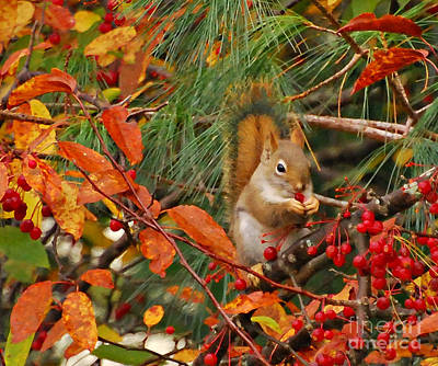 Photograph - Berry Loving Squirrel by Kerri Farley