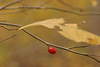 Photograph - Berry by Mark Russell