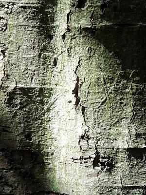 Typography Tees - Bersham Bark 1 by Brainwave Pictures