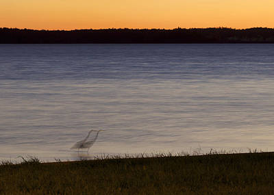 Photograph - Beside Myself - Great Blue Heron At Sunset by Jane Eleanor Nicholas