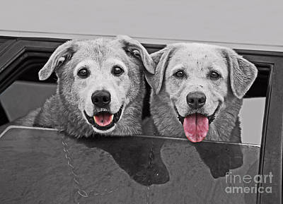 Photograph - Best Buddies by Terri Mills