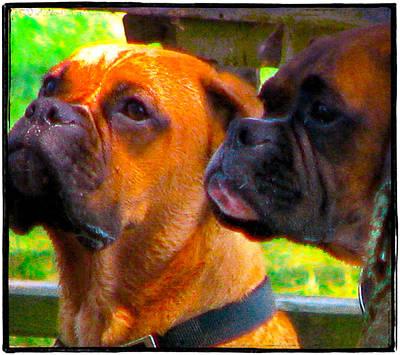 Boxer Dog Digital Art - Best Friends Dog Photograph by Laura Carter