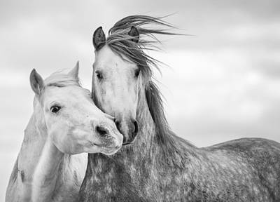 Black Horse Photograph - Best Friends I by Tim Booth