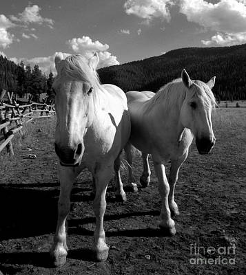 Photograph - Best Friends by Jennie Stewart