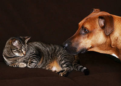 Felines Photograph - Best Friends by Lisa Phillips