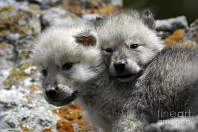Wolves- Best Friends Art Print
