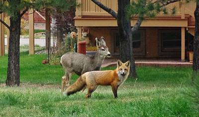 Deer Photograph - Best Friends by Savanna Paine