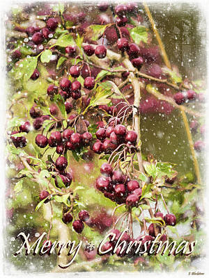 Photograph - Best Of All Gifts - Seasonal Art by Jordan Blackstone