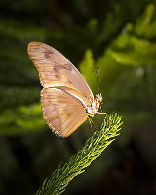 Photograph - Best Side Of The Butterfly by Jean Noren