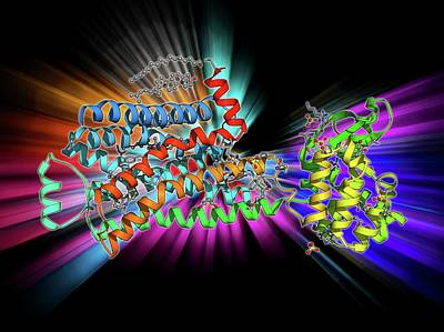 Medical Illustration Photograph - Beta-2 Adrenergic Receptor Molecule by Laguna Design