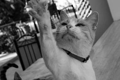 Photograph - Bette High Five by Anita Dale Livaditis