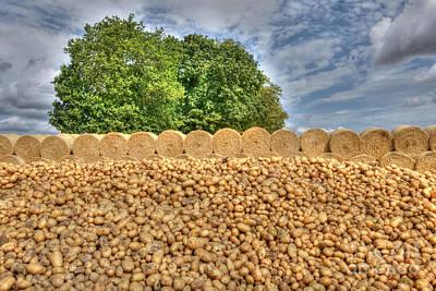 Photograph - Potato Pile by David Birchall