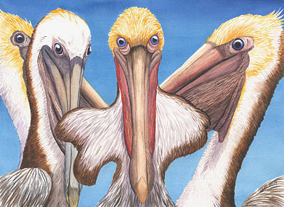 Brown Pelican Painting - Better Than A Turtle by Catherine G McElroy