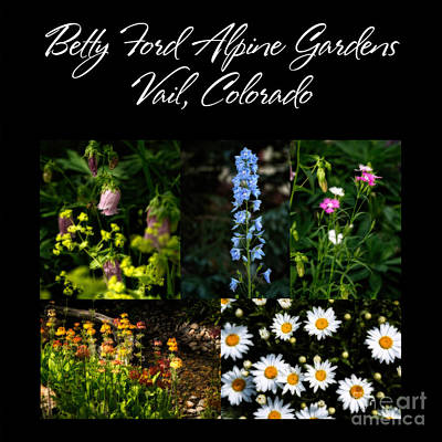 Betty Ford Alpine Gardens Original